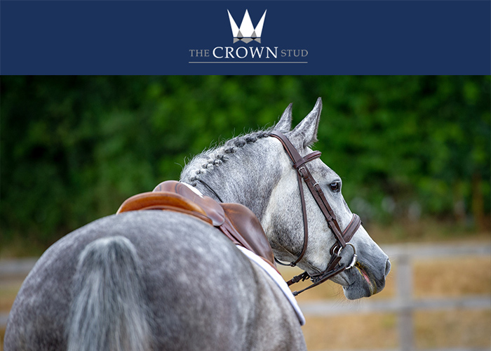 The Crown Stud